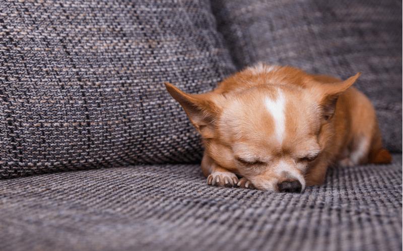 犬にとってチョコレートは危険物!?食べてしまった時の症状と対処法