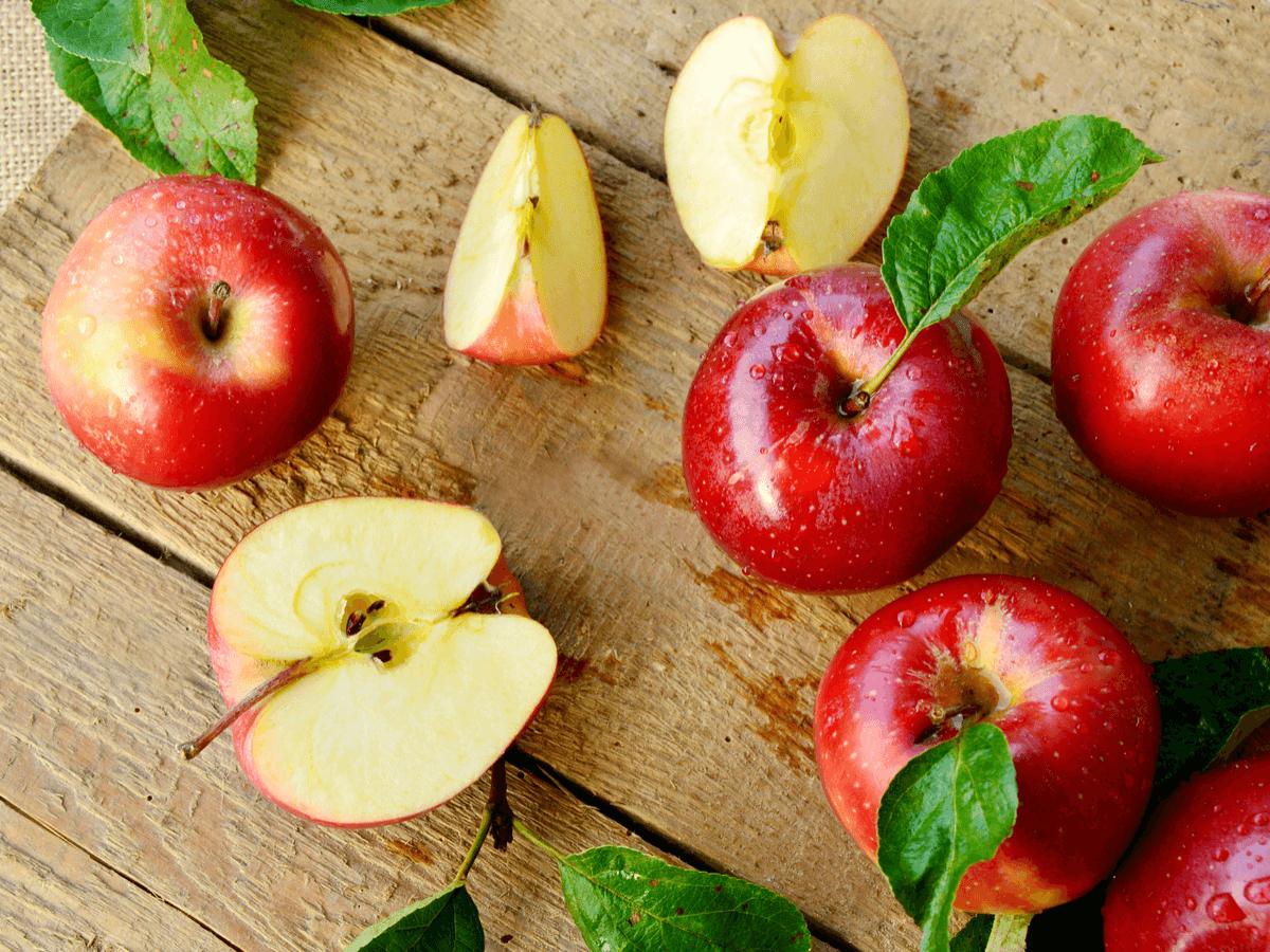 犬にりんごはあげてもいいの?りんごのメリットと適切な量や注意点