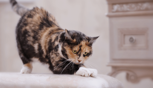猫はなぜ爪とぎをするの?その原因やしつけ方法・防止グッズを伝授