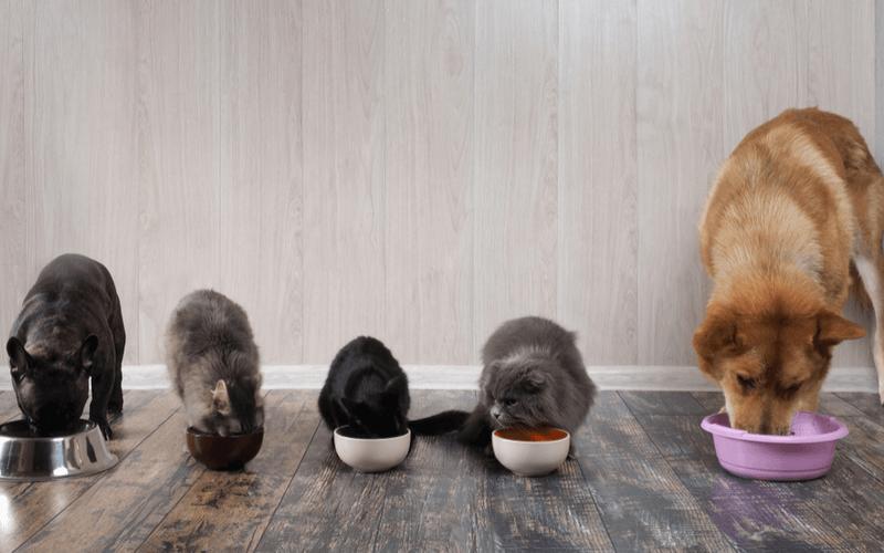 ペットホテルに猫を預ける際のポイントや料金、おすすめのペットホテル5選