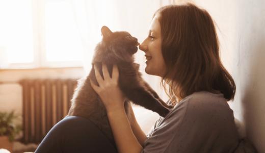 「まる」という猫がかわいいと人気の理由は?ブログ・動画・インスタで高収入!?