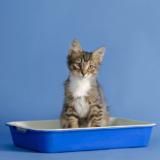 猫のトイレのしつけは意外に簡単!しつけのポイントとトイレの種類