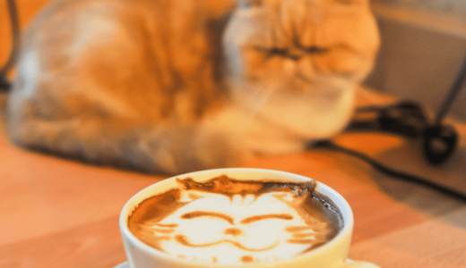 新宿の猫カフェおすすめ6選!穴場スポットや気になる料金設定などについて