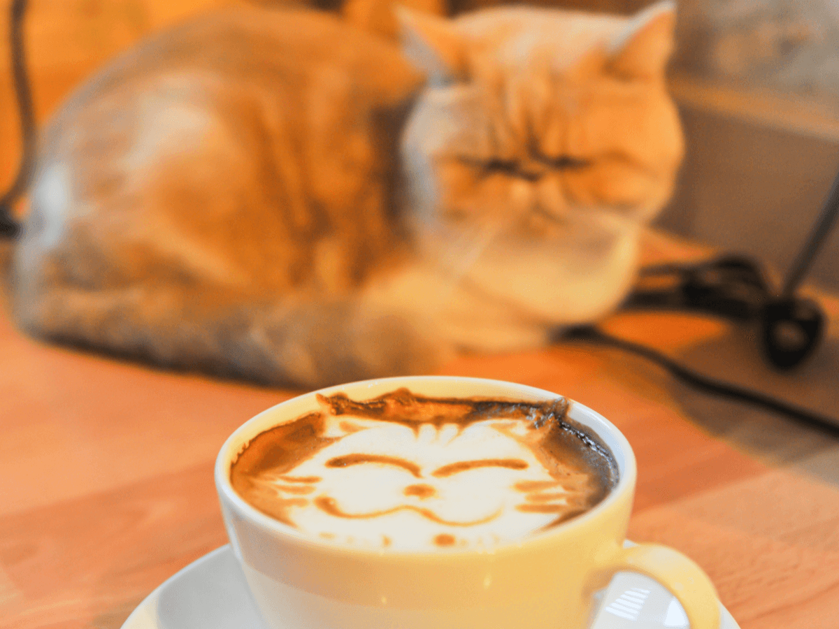 新宿にあるおすすめの猫カフェはここ!気になる料金や猫カフェの楽しみ方