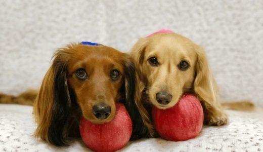 犬にりんごはあげてもいいの?適切な量や注意点をチェック