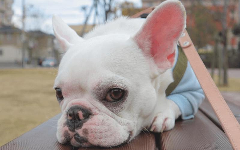 飛行機NG 犬