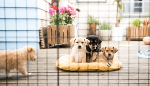 小型犬用ケージの選び方やポイントとおすすめ商品5選!