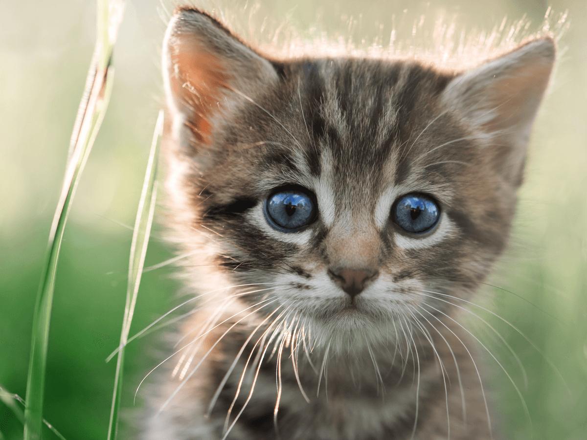 切らないで!猫のひげが持つ役割とご利益