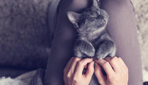 猫が体を「すりすり」してくるその愛すべき理由とは?しつこいときの対処法はある?
