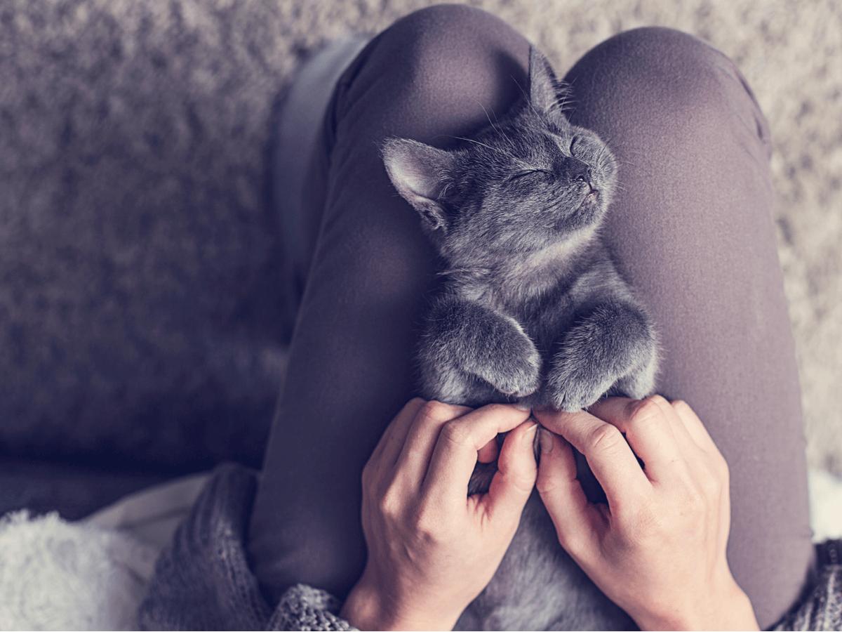 猫が体を「すりすり」してくる!その愛すべき理由とは?しつこい時の対処法はある?