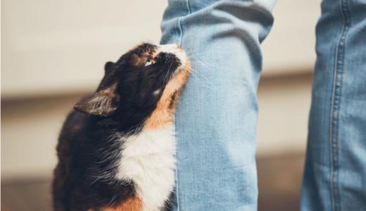 猫がゴロゴロと喉を鳴らす意味や本当の理由5つ