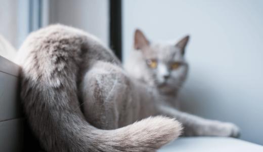 猫の去勢手術とは?性別ごとのベストな時期や手術の注意点などを解説!
