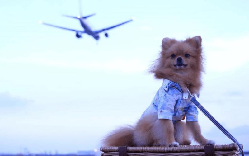 飛行機 犬