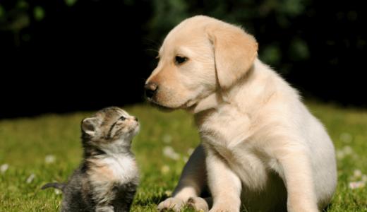 犬と猫飼いやすいのはどっち?それぞれの違い・相性・寿命の比較と必要グッズ20選!