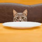 猫はイカを食べても大丈夫?栄養豊富なイカを上手に取り入れるには