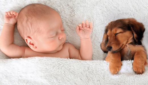 赤ちゃんと犬は一緒に暮らしても大丈夫?共同生活のメリットと注意点