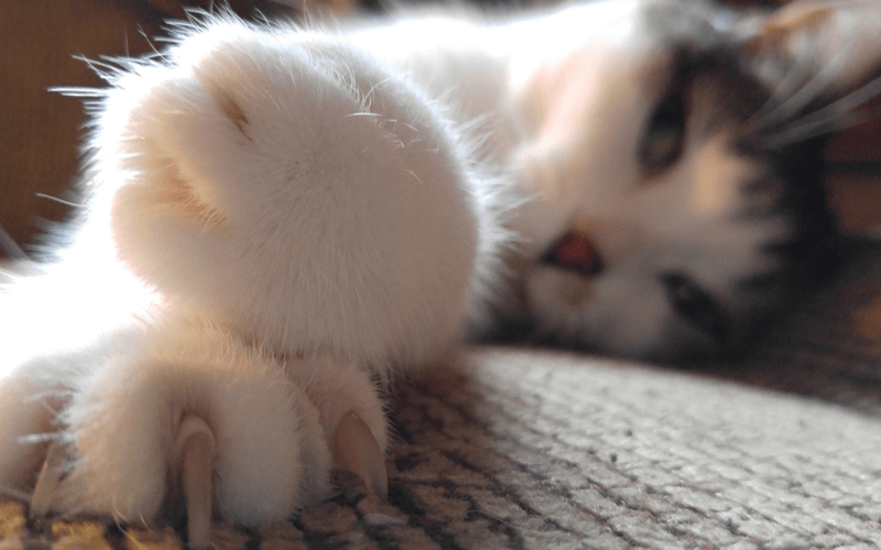 猫はなぜ爪とぎをするの?テーブルの脚などに爪とぎされて困っている飼い主さんへしつけ方法教えます!