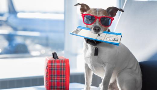 犬は飛行機に乗せてもOK?旅行に行く前に航空会社で違う利用方法を知っておこう