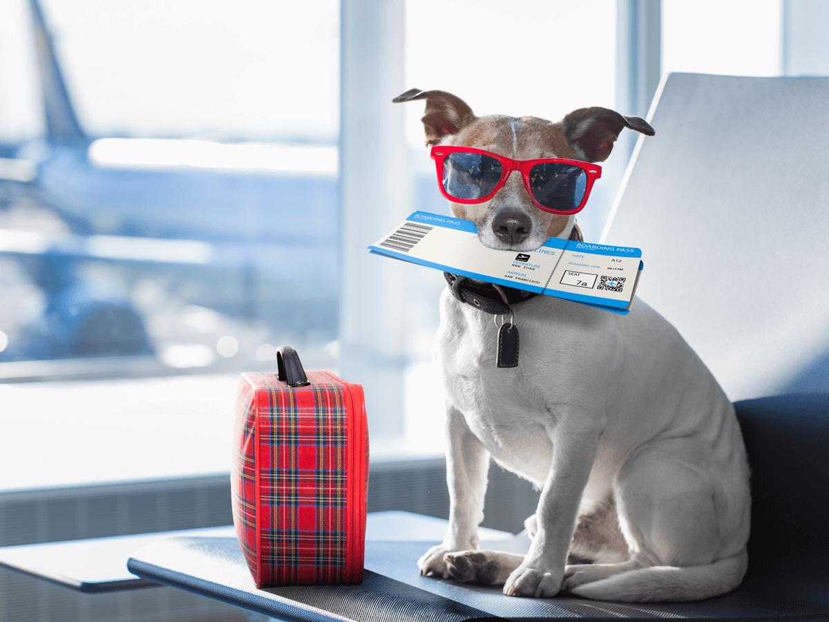 犬は飛行機に乗せてもOK?航空会社で違う利用方法と乗車注意点を知っておこう
