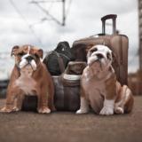 犬と新幹線に乗って出かけたい!乗車できる条件と注意するべき点とは