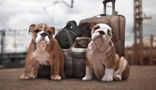 新幹線に犬と乗車するときの料金は?マナーを守ってキャリーバックで移動をしよう