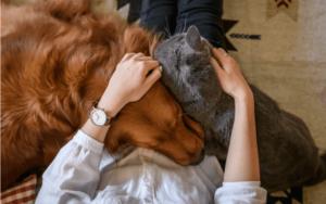 犬と猫人気が高いのは?飼いやすいのはどっち?