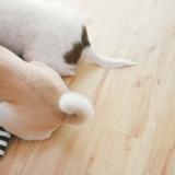 犬の去勢は必要?去勢のメリットとデメリット、かかる費用とタイミングは?