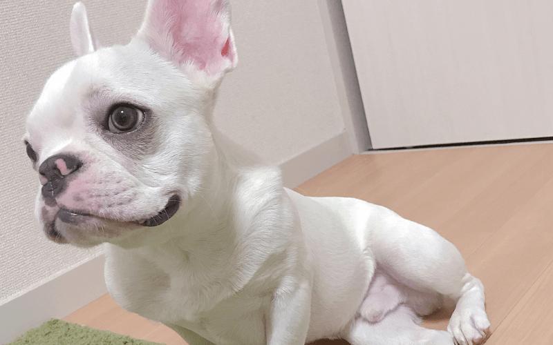 犬の歯磨きが必要な理由