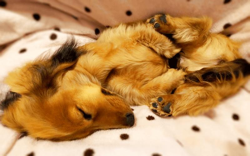 犬 睡眠時間