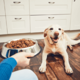 犬のための食器「フードボウル」はどんなものがあるの?