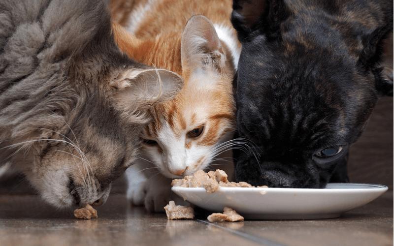 猫のフードボウルを選ぶポイントとおすすめの猫食器◯選