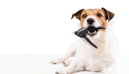 犬の爪切りおすすめ10選!コツをつかんだやり方でスムーズに行おう