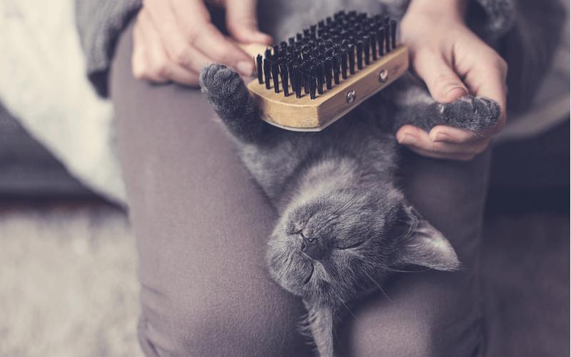 猫の抜け毛の原因3つと抜け毛対策 抜け毛をそのままにしておくと猫の健康を害することも!