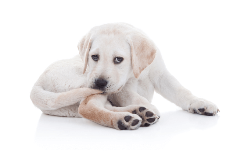 犬のしっぽの動きや状態で気持ちや病気を知ろう