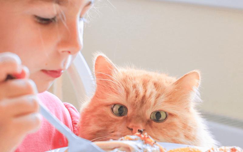 猫が食べてはいけないもの 大切な愛猫を守るために知っておくべき猫に与えてはいけないもの