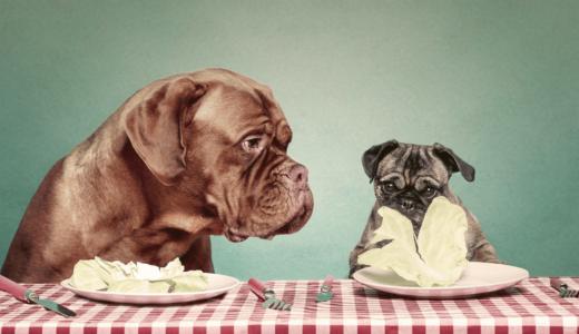 肥満な愛犬は要注意?ダイエットを成功させるための食事と運動