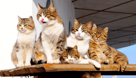 猫の年齢に関するアレコレをご紹介!歳の換算や見分け方