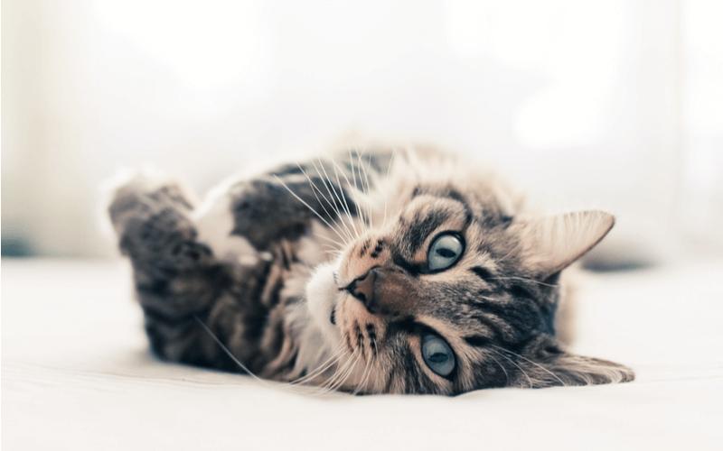 年齢の換算や見分け方など、猫の年齢に関するアレコレをご紹介!