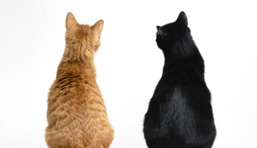 猫の発情期| 知ればストレスも減らせる!期間や特徴・対処法