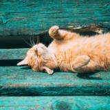 猫の仕草で気持ちがわかる!?しっぽやひげが示す意味とは