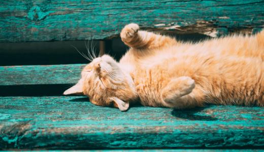 猫の仕草で気持ちがわかる本5選!しっぽ・まばたき・ひげ・甘噛みなどが示す意味とは