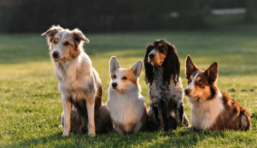 優しい犬種11選!小さな子どもや飼い主との相性が良いその種類とは