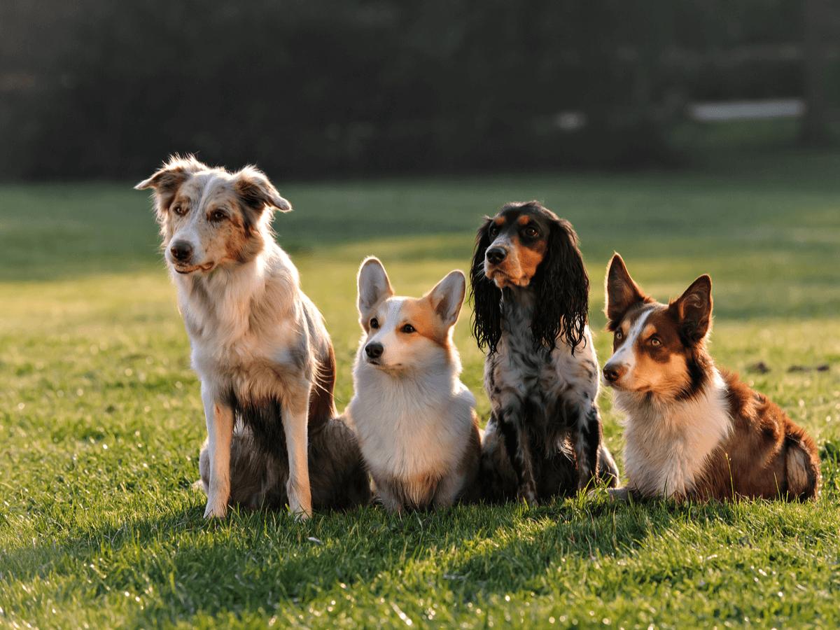お子様がいる家庭でも安心!優しい犬種をチェックしてみよう