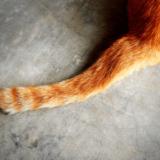 猫はしっぽの動きで自分の気持ちを表現するって本当? しっぽの動きとそのときの気持ち
