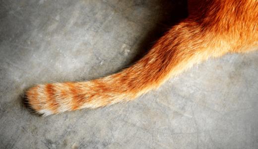 猫はしっぽの動きで自分の気持ちを表現するって本当?動き方でわかる猫の心理