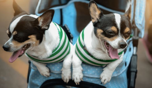 ペットカートで人気のあるおすすめ30選を厳選!小型犬~大型犬にも使える製品の選び方とは