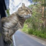 旅行に行くとき飼い猫はどうしたらいいの?