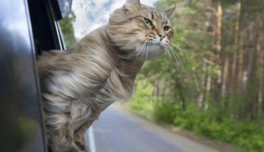 旅行に行くとき猫はどうする?連れて行く場合・留守番時の注意点とペットホテルなどの活用方法