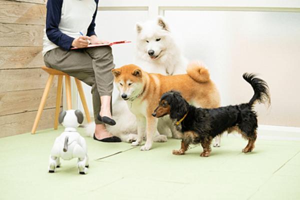 犬型ロボットと犬の共生