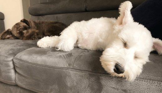 犬の睡眠時間の平均や年齢による違いって?愛犬の健康のために欠かせない眠りの重要性
